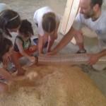 I bambini del laboratorio didattico giocano con la segatura che stata prodotta con la lavorazione delle tavole.