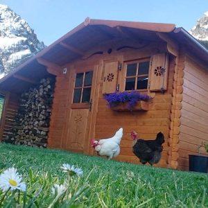 casetta per le galline